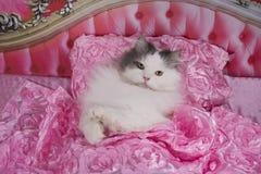 Katten gick att bädda ned i en rosa säng royaltyfria foton