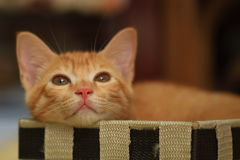Katten gick in i asken Royaltyfria Bilder