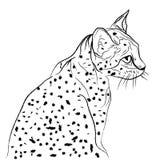 Katten gillar en tiger Royaltyfria Bilder