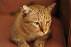 Katten gillar tigern Arkivbild