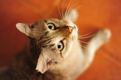 Katten gillar tigern Arkivbilder