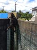 Katten Grappige Sprong Stock Fotografie