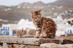 Katten in Griekenland Stock Afbeeldingen