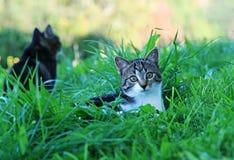 Katten in het gras Stock Foto's