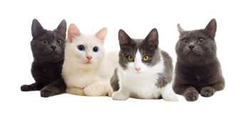 Katten het kijken Royalty-vrije Stock Afbeeldingen