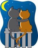 Katten in het Maanlicht Stock Fotografie