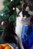 katten Het thema van Kerstmis Stock Foto