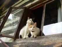 Katten in het venster Stock Foto's