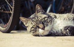 katten hoofdclose-up Royalty-vrije Stock Foto's