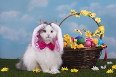 Katten i dräktkaninen firar påsk royaltyfri fotografi