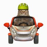 Katten i en hjälm kör en liten bil royaltyfria bilder