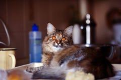 Katten i köket har gjort skada Hem- katt arkivfoton