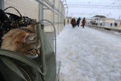 Katten i påsen Royaltyfria Bilder