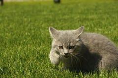 Katten i parkera på gräset Royaltyfria Foton