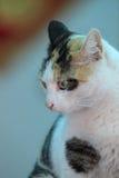 Katten i tänka royaltyfria foton