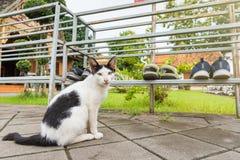 Katten i templet Thailand Arkivfoton