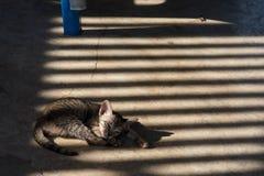 Katten i templet Thailand Arkivbilder