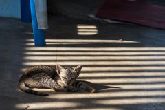 Katten i templet Thailand Royaltyfri Fotografi