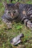 Katten jagade en fågel Arkivbild