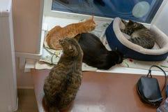 Katten in kattenkoffie stock foto's