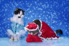 Katten klädde som Santa Claus i vinterskogen royaltyfria foton