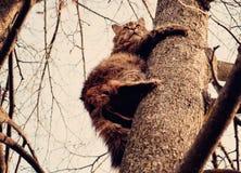 Katt på en tree Fotografering för Bildbyråer