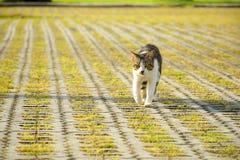 Katten kommer över Royaltyfria Bilder