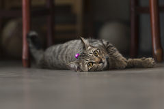katten kopplar av royaltyfria foton