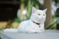 katten kopplar av Arkivbild