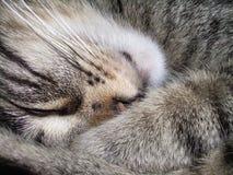 katten kopplar av s Royaltyfri Bild
