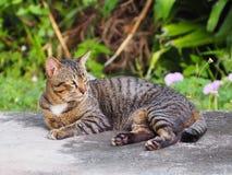 Katten kopplar av tid Royaltyfri Fotografi