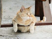 Katten kyler under en stol Arkivbilder