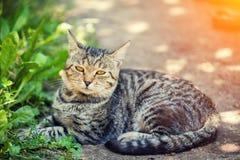 Katten lägger i gården fotografering för bildbyråer