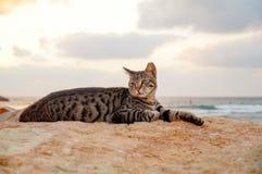 Katten lägger på stranden arkivfoto