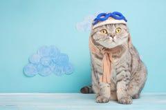 Katten leuke vliegenier proef, Schotse Whiskas in masker en beschermende brillen van een piloot met ruimte voor ontwerp Het conce royalty-vrije stock fotografie