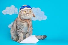Katten leuke vliegenier proef, Schotse Whiskas in masker en beschermende brillen van een piloot met ruimte voor ontwerp Het conce stock afbeeldingen