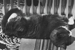 Katten ligger nära elementet arkivbilder