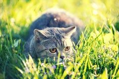 Katten ligger på den gröna gräsmattan royaltyfri fotografi