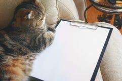 Katten ligger på den tomma skrivplattan Royaltyfria Bilder