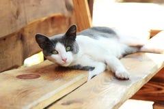 Katten ligger på en bänk Arkivbilder