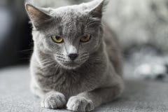Katten ligger på en soffa Royaltyfria Bilder