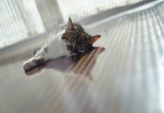 Katten ligger på golvuppvärmning Arkivbild