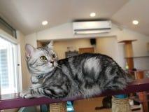 Katten ligger på kanten av balkongen arkivbilder