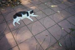 Katten ligger på streen Fotografering för Bildbyråer