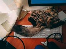 Katten ligger på tangentbordet arkivbild