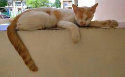 Katten ligger på väggen royaltyfri foto