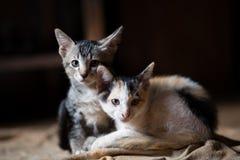 Katten lite katter, kopplar samman katter royaltyfri foto