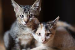 Katten lite katter, kopplar samman katter Arkivbild