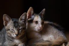 Katten lite katter, kopplar samman katter Arkivfoton