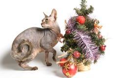 katten möter nytt år arkivbilder